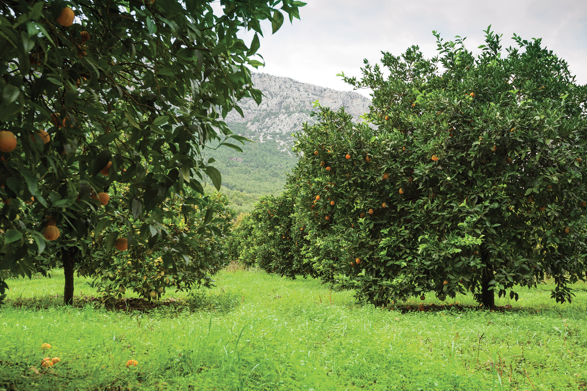 visu-orange-plantation.jpg